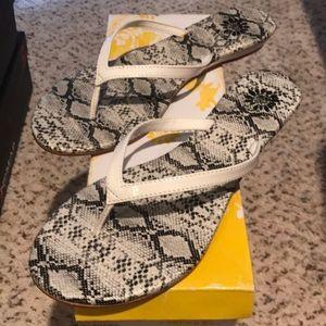 Yellow Box Python White